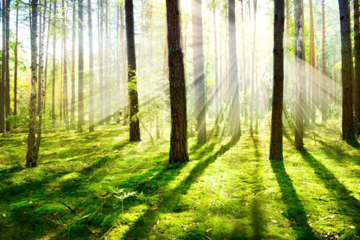 Fontins naturreservat – Kungälvs mest välbesökta naturområde