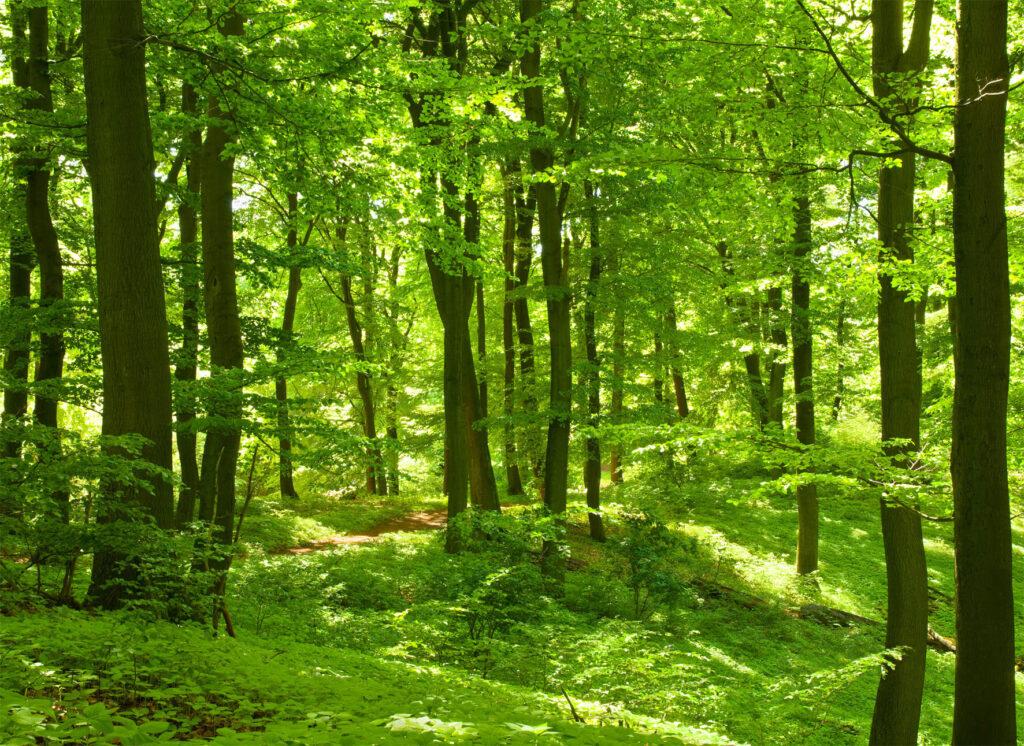 Bohusleden vandringsvänliga stigar och grusvägar