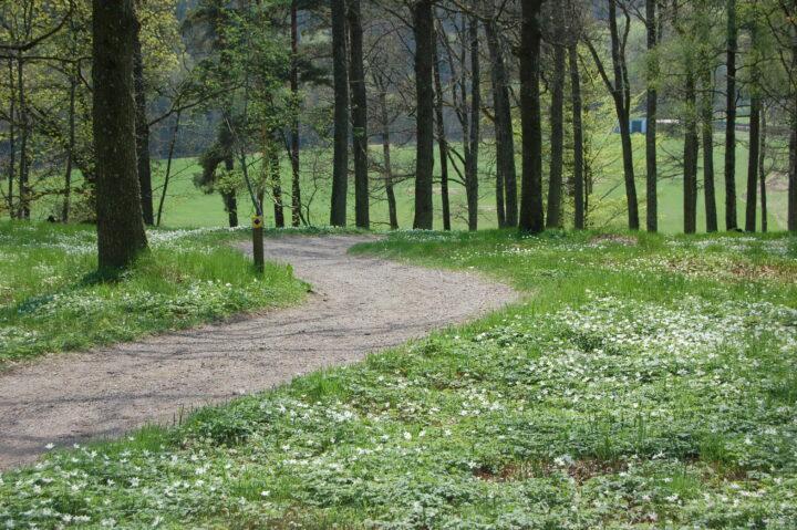 Naturstigen i Alvhem tre kilometer med spännande historia och natur