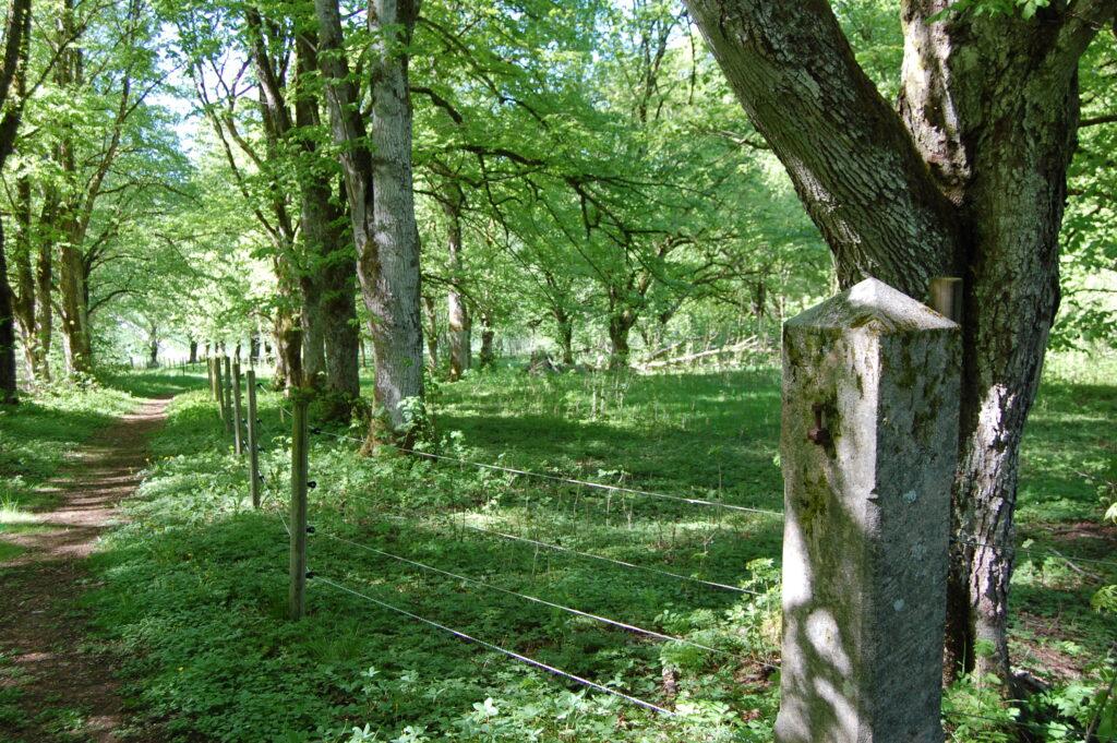 Götaälvadelns största vikingatida gravfält