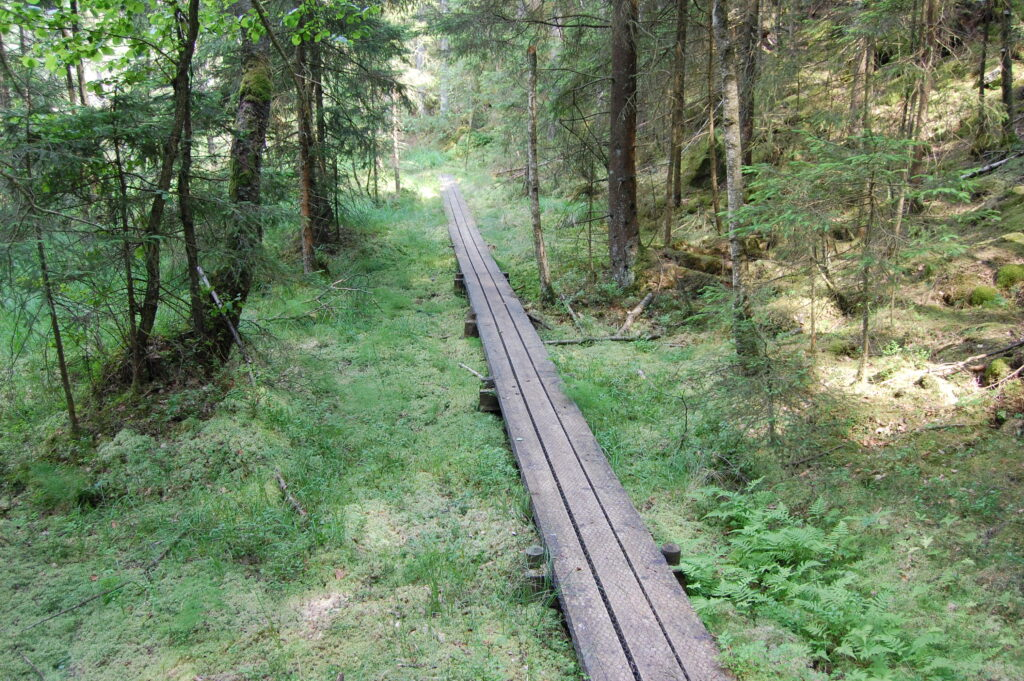 Risveden - vildmark när den är som bäst